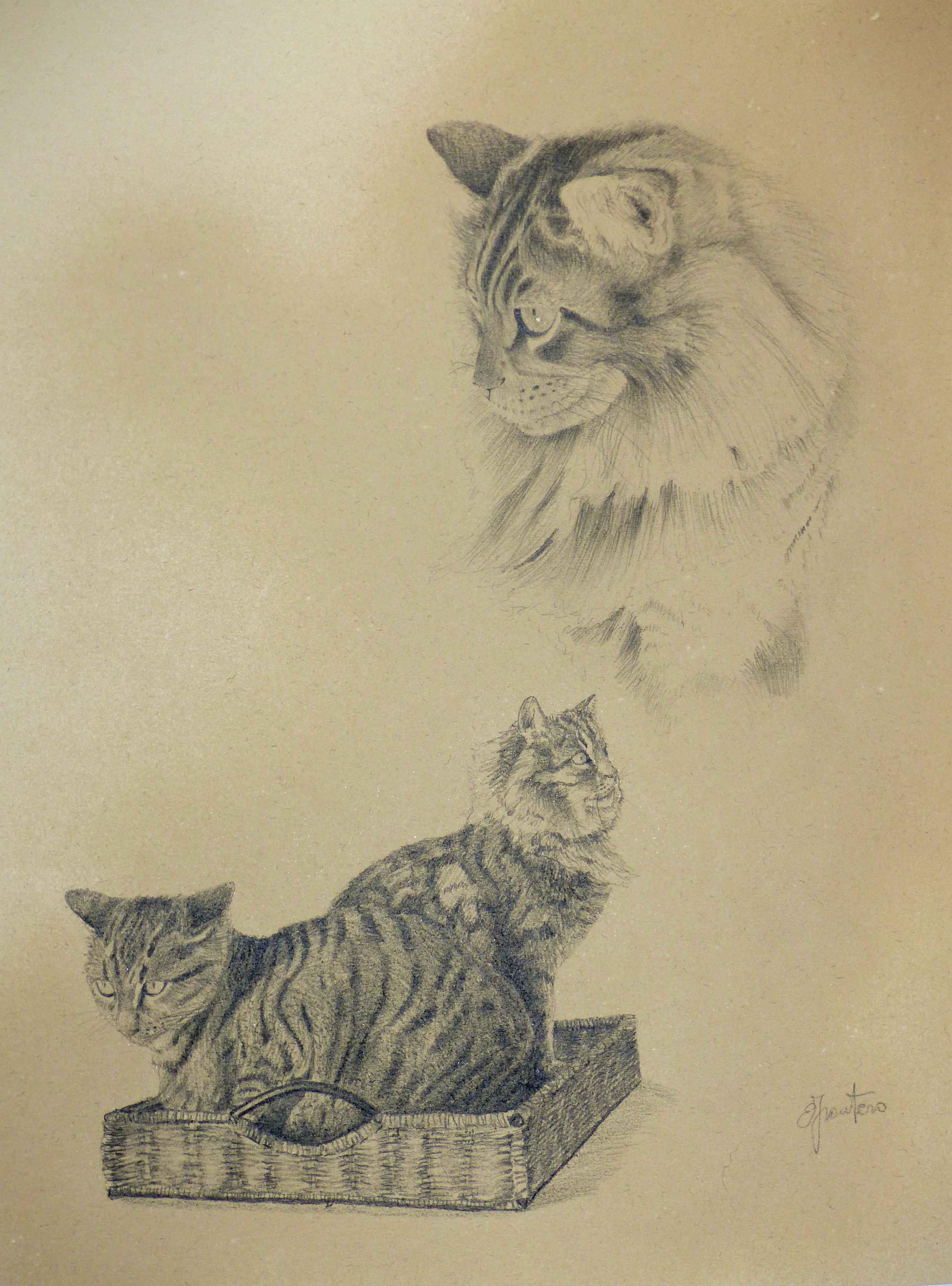 felini domestici