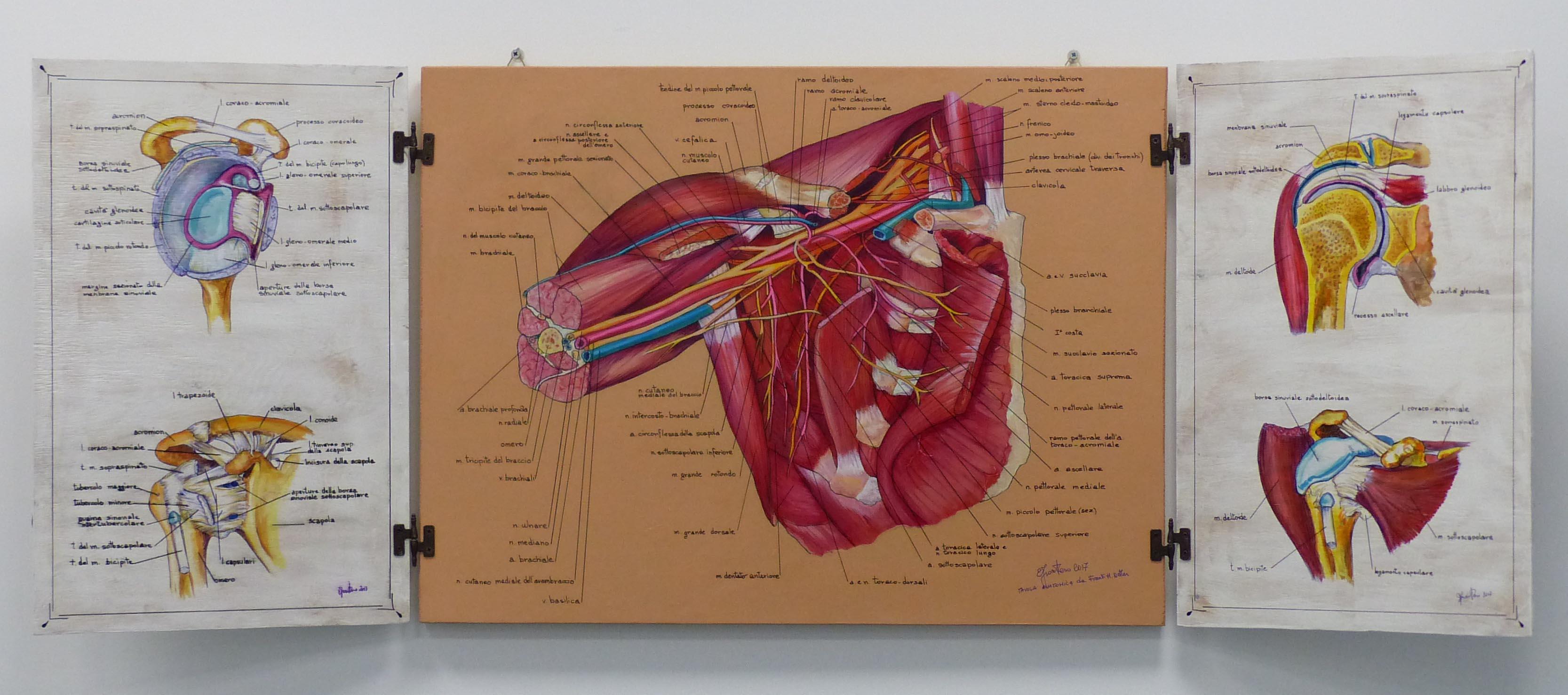 tavola anatomica completa